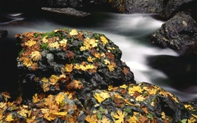 Stones, yellow leaves, creek, autumn HD wallpaper