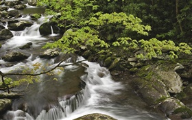 Stream, creek, stones, Great Smoky Mountains National Park, Tennessee, USA HD wallpaper