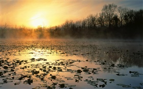 Sunrise, pond, trees, dawn, fog HD wallpaper
