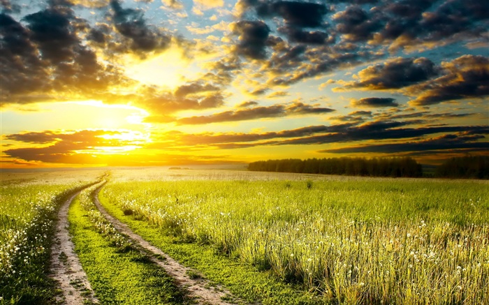 Sunset, meadow, grass, field, sun, clouds Wallpapers Pictures Photos Images