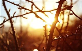 Sunset, tree branches, macro photography HD wallpaper
