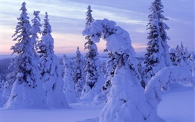 Thick snow, trees, dawn HD wallpaper