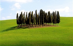 Trees, grass, Italy HD wallpaper