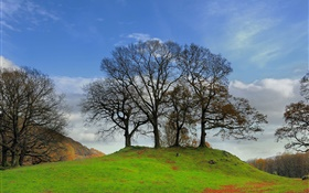 Trees, slope, grass HD wallpaper