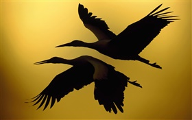 Two birds flying, sunset HD wallpaper