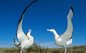 Two seagull wings HD wallpaper