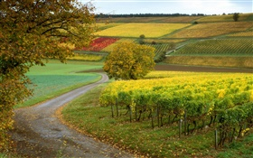 Vineyards, farms, autumn