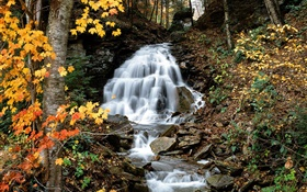 Waterfall, creek, trees, yellow leaves, autumn HD wallpaper