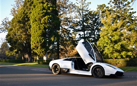 White Lamborghini Murcielago supercar, trees, road, sunshine HD wallpaper