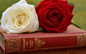 White and red rose flowers, book HD wallpaper