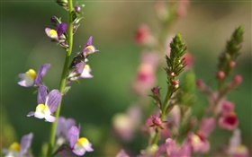 Wildflowers close-up, bokeh, spring HD wallpaper