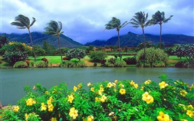 Wind, trees, flowers, mountains, clouds, Hawaii, USA HD wallpaper