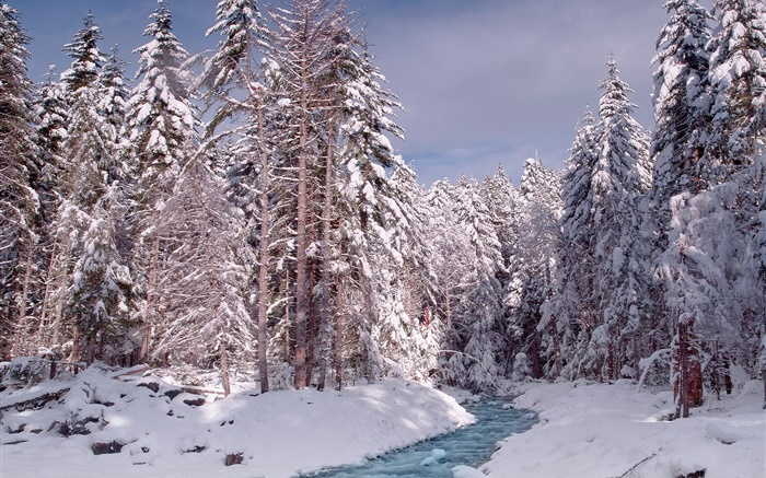 Winter, forest, trees, thick snow, river Wallpapers Pictures Photos Images