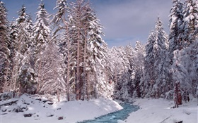 Winter, forest, trees, thick snow, river HD wallpaper