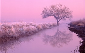 Winter morning, frost, trees, river, red sky HD wallpaper