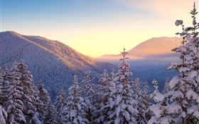 Winter, mountains, snow, trees, sunset HD wallpaper