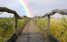 Wood footpath, fence, grass, rainbow, summer HD wallpaper