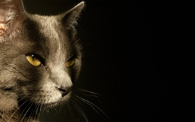 Yellow eyes cat face, black background HD wallpaper