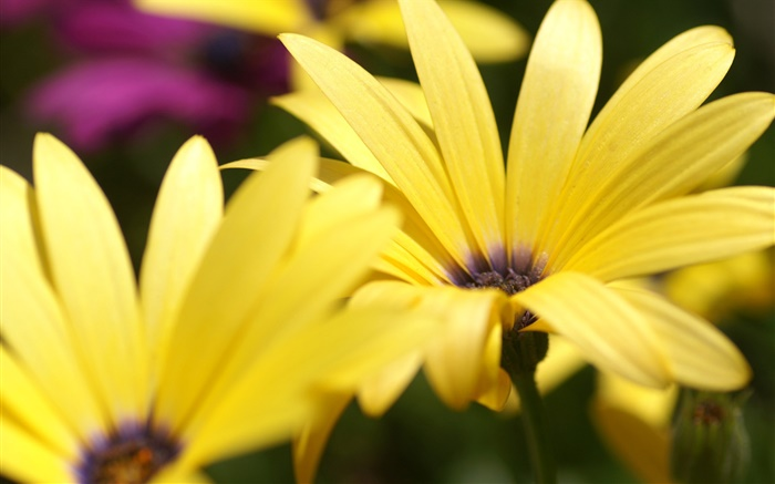 Yellow flower petals macro photography Wallpapers Pictures Photos Images