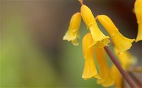 Yellow flowers close-up, bokeh HD wallpaper