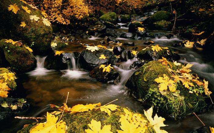 Yellow leaves, stones, creek Wallpapers Pictures Photos Images