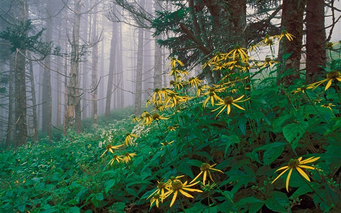 Yellow wildflowers in the forest Wallpapers Pictures Photos Images