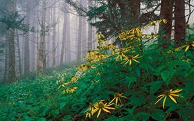Yellow wildflowers in the forest
