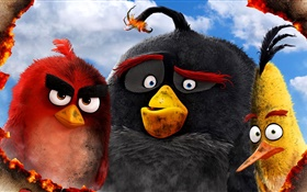 Angry Birds movie 2016 HD wallpaper
