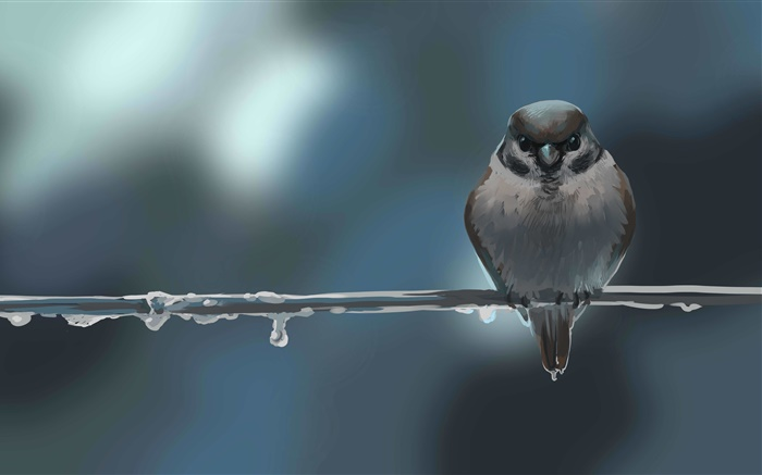 Art drawing, bird, sparrow, twig, dew Wallpapers Pictures Photos Images