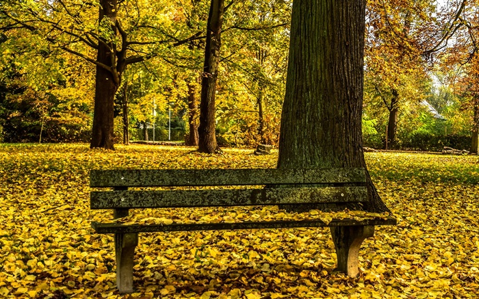 Autumn Park Bench Trees Yellow Leaves Ground Hd Wallpapers