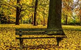 Autumn, park, bench, trees, yellow leaves ground HD wallpaper