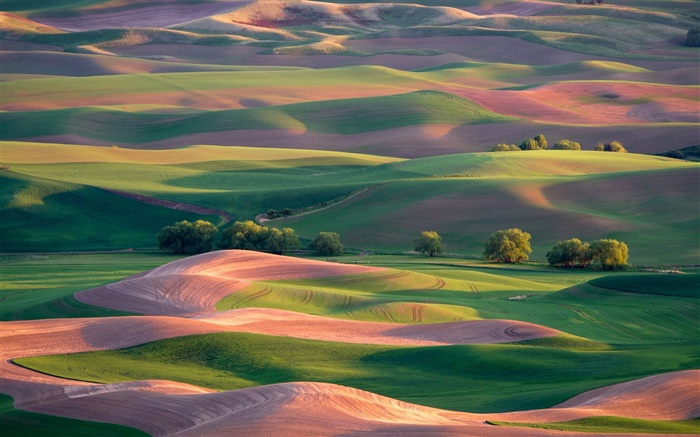 Beautiful spring, field, hills, trees, green and brown Wallpapers Pictures Photos Images