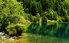 China, Jiuzhaigou National Park, lake, trees, green HD wallpaper