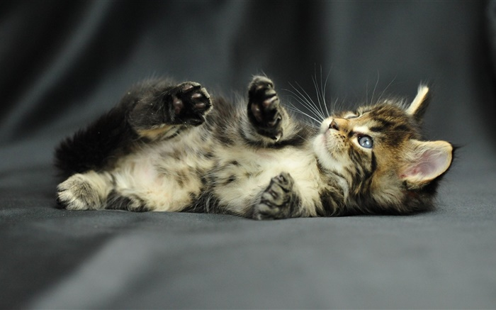 Cute kitten baby Wallpapers Pictures Photos Images