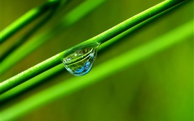 Dew, grass, green, macro photography HD wallpaper