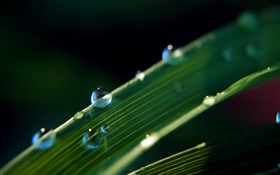 Dew on the leaf, nature plants HD wallpaper