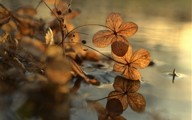 Dry leaves, puddle, water reflection, bokeh HD wallpaper