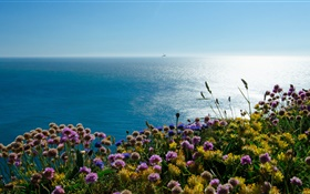 England Irish, sea, puffin flowers HD wallpaper