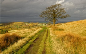England nature scenery, grass, road, tree, clouds, autumn HD wallpaper