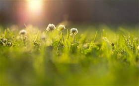 Flowers, grass, meadow, sun rays, bokeh HD wallpaper
