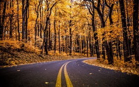 Forest, road, yellow leaves, trees, autumn HD wallpaper