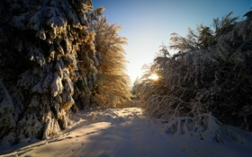 Germany, Hesse, winter, snow, trees, sun rays