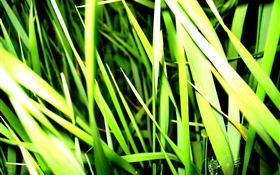 Grass close-up, light, insect HD wallpaper