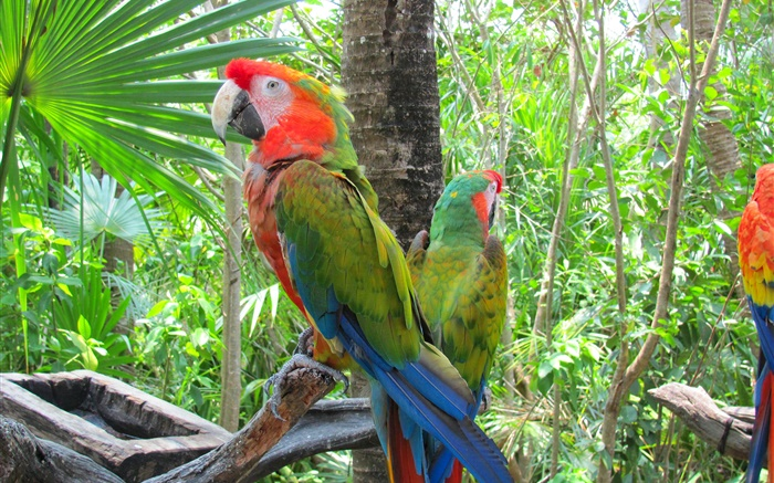 Green feather parrot, trees Wallpapers Pictures Photos Images