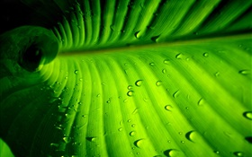 Green leaf close-up, stripes, water drops HD wallpaper