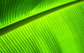 Green leaf close-up, stripes HD wallpaper