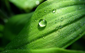 Green leaf close-up, water drops, dew HD wallpaper