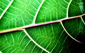 Green leaf context close-up HD wallpaper