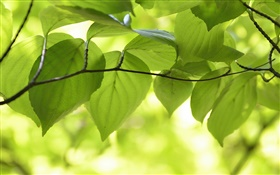 Green leaves, branches, nature scenery, bokeh
