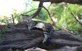 Grey kitten sleeping on the tree